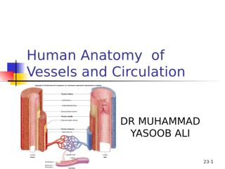 Vessels and Circulation.ppt