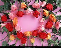 وردة .jpg